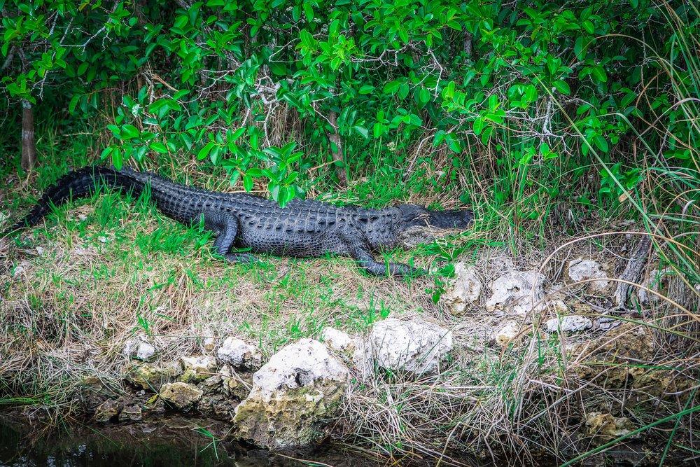 everglades_reizen_met_kinderen_Shark_Valley_Florida_Fietsen-37.jpg