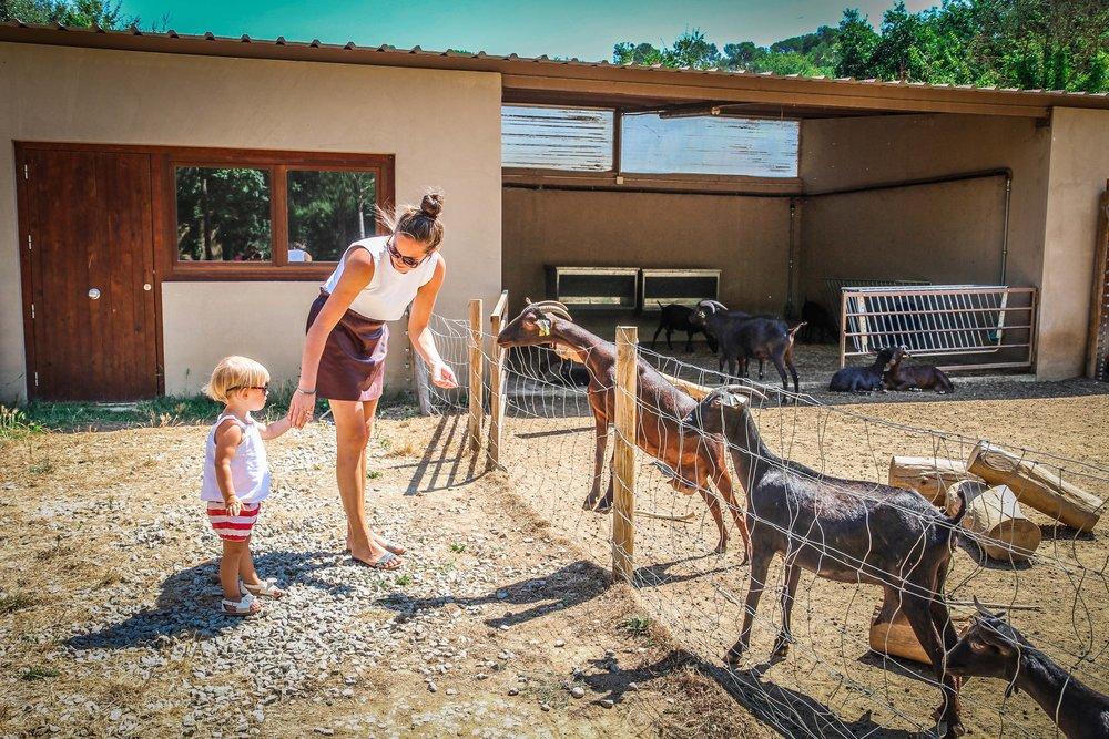 Hotel Mas Salagros - Kinderboerderij