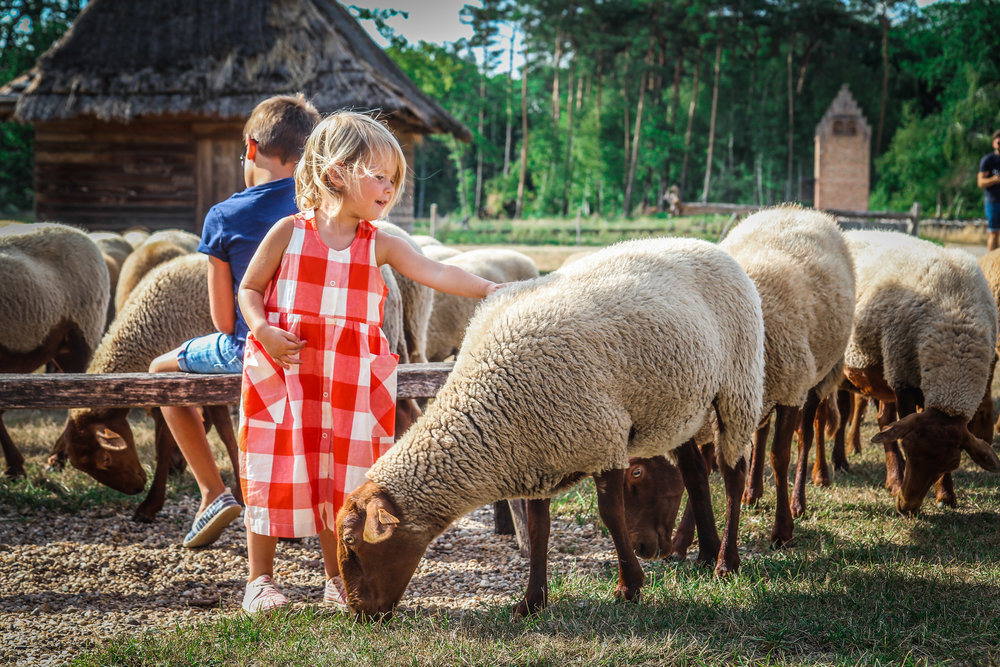 Bokrijk - Schaapjes herder dieren