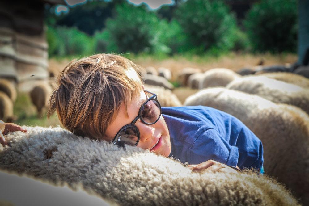Bokrijk - Schaapjes herder