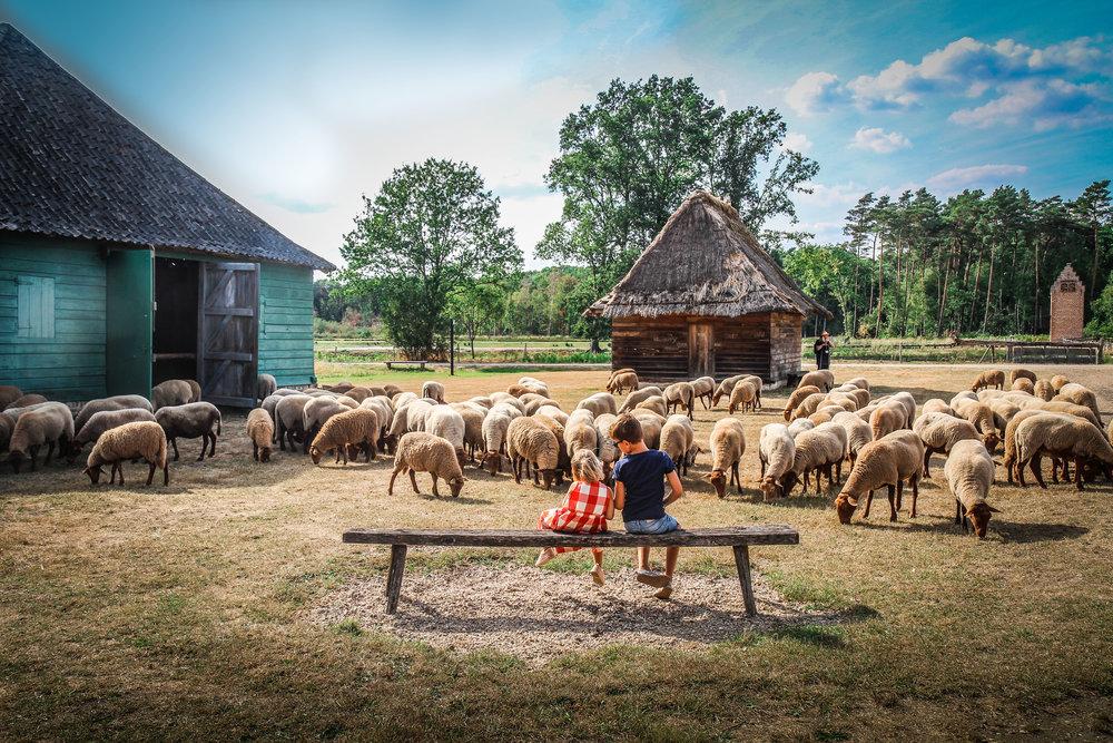 Bokrijk - Schaapjes herder hoeden