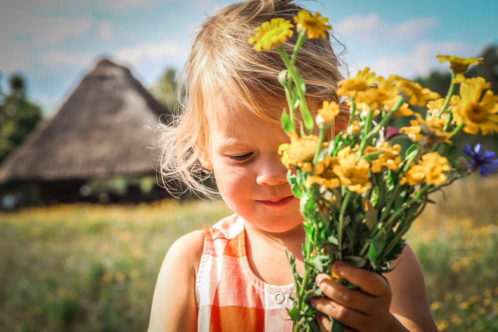 Bokrijk Zomerfestival - Dag uitstap