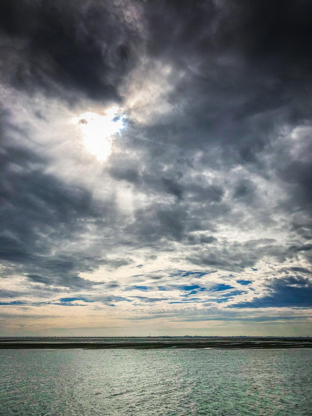 Oosterschelde - Rondvaart - Zeehonden spotten - natuur