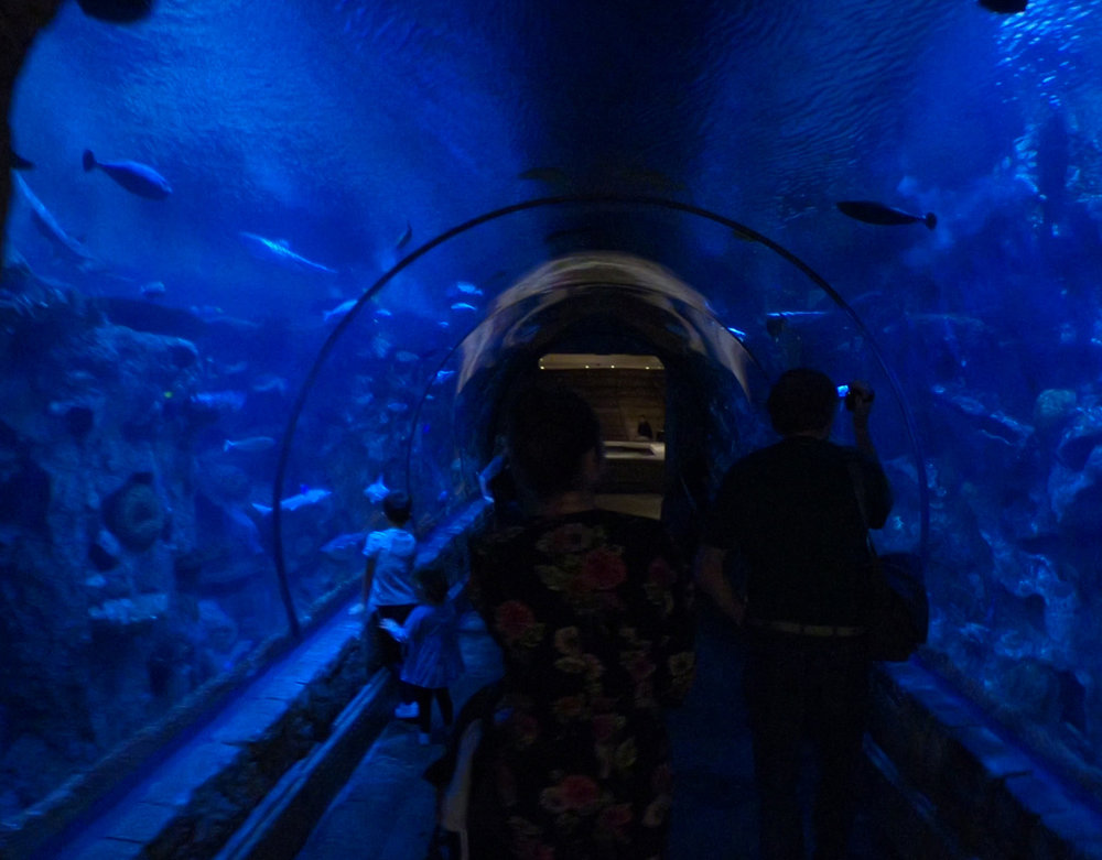 shark reef aquarium at mandalay bay_vegas met kinderen3.jpg