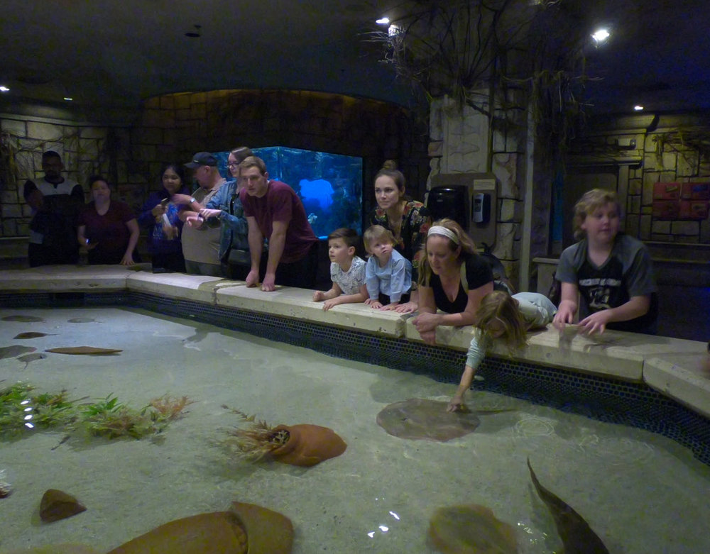 shark reef aquarium at mandalay bay_vegas met kinderen5.jpg