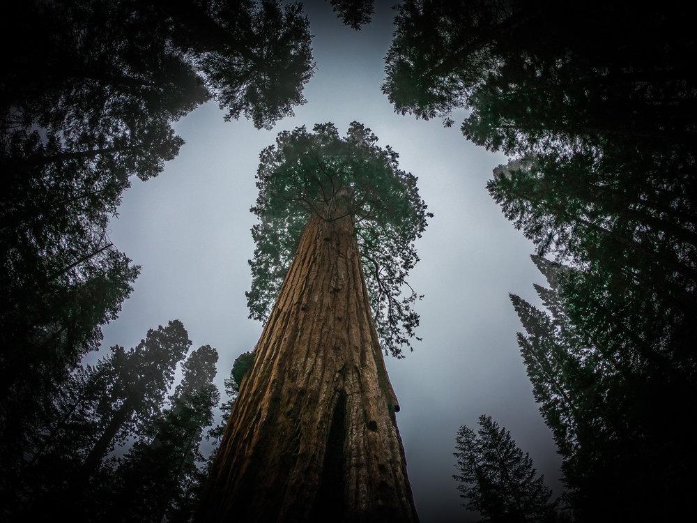 withkidsontheroad_WestKust_Sequoia-3.JPG