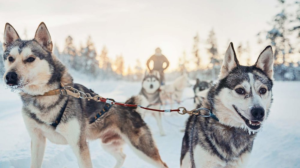 Husky Excursion available in Winter & Summer