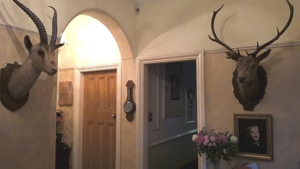 hall antlers.jpg