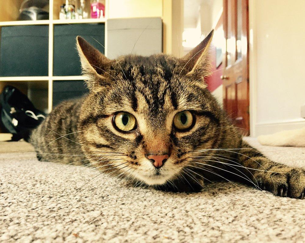 Milton the cat.jpg