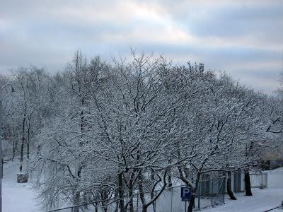 talvea3-2.jpg