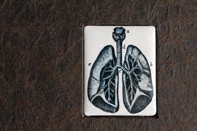 lungs3-3.jpg
