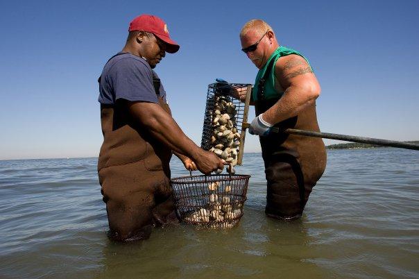 oyster 2.jpg