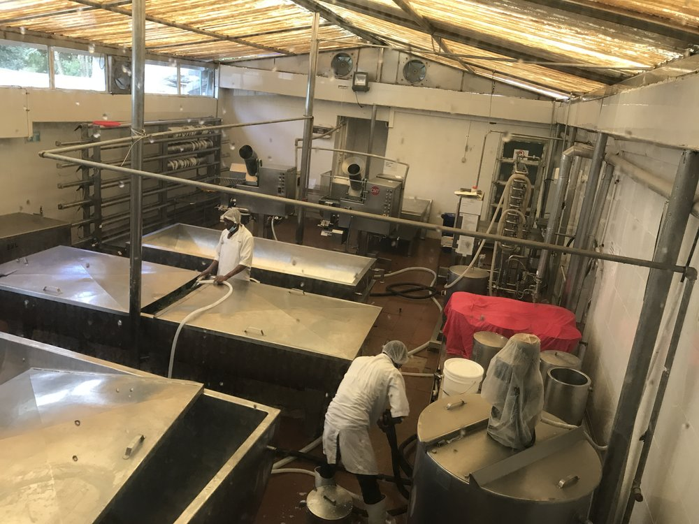 Bird's eye view of the cheesemaking process
