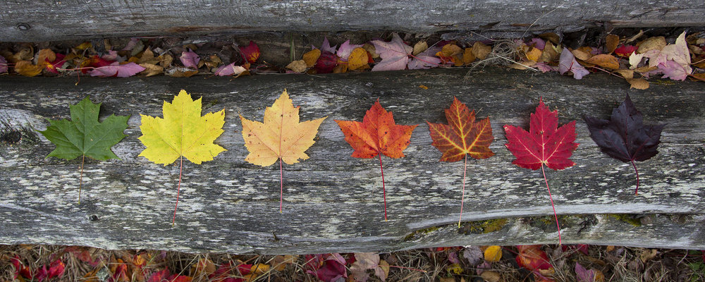 October+Lineup.jpg