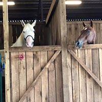 Finnigan horses in stalls.jpg