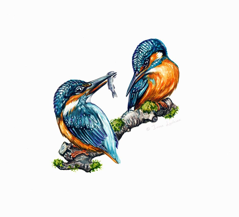 irina_luchian_eisvogel_kingsfisher_pair.jpg