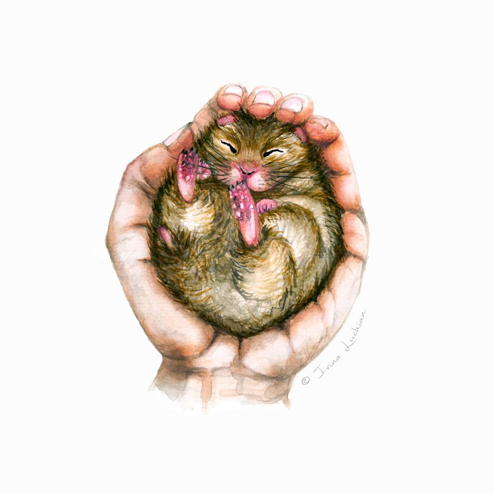 Hand holding a sleeping hamster