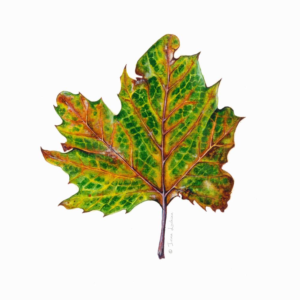 Rusty plante tree leaf illustration