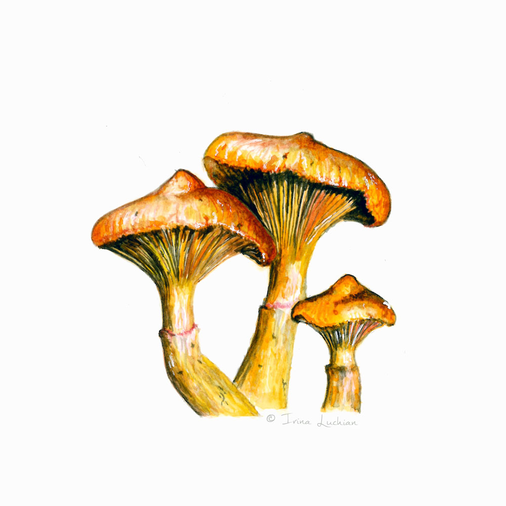 irina_luchian_mushrooms.jpg