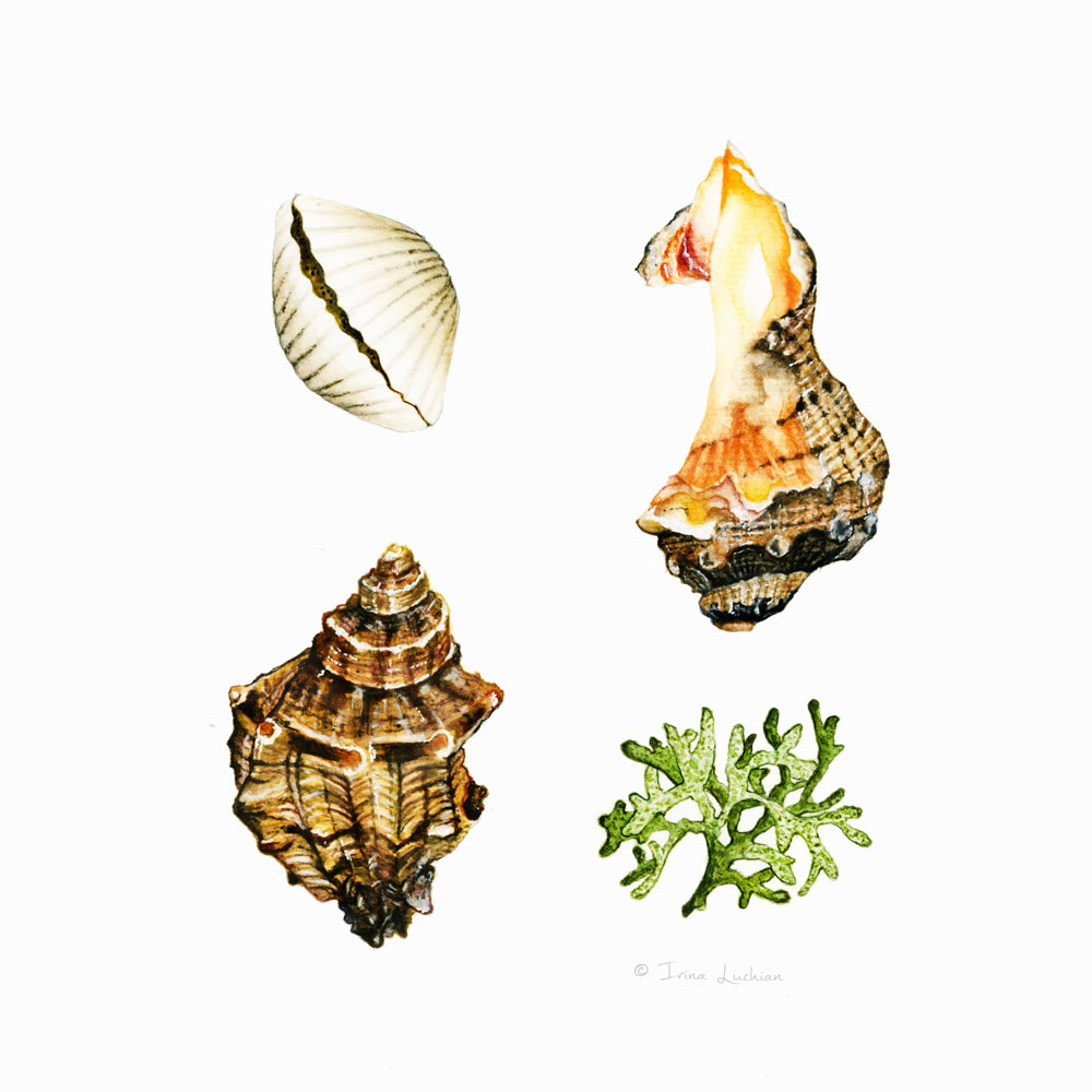 Various sea shells illustration grid