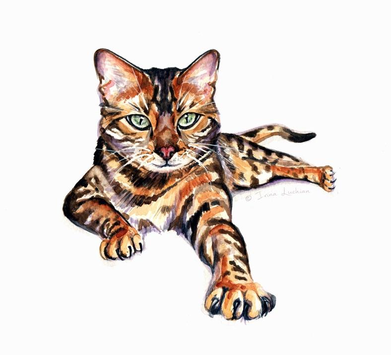 Bengal cat illustration