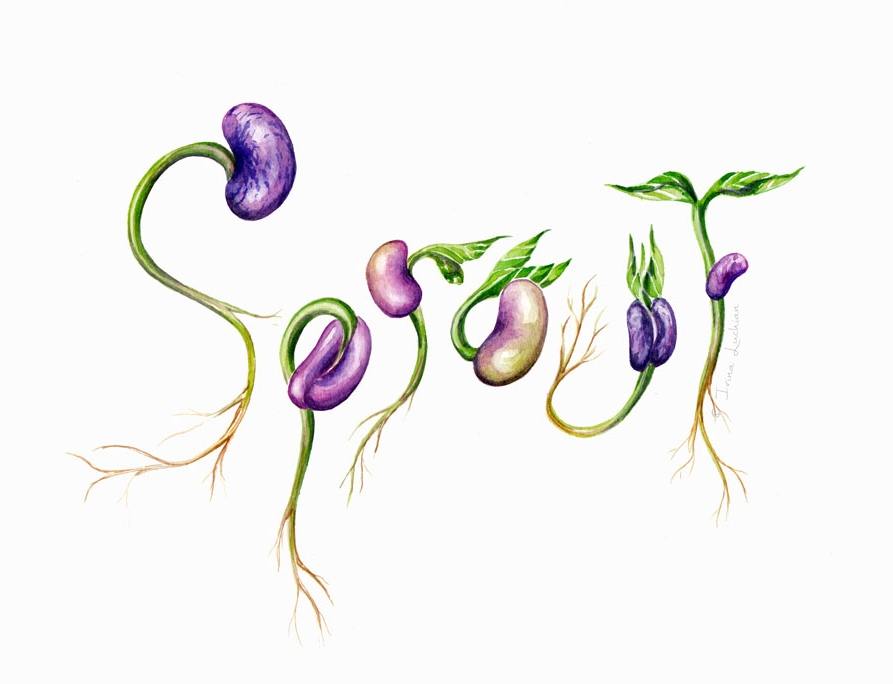 Sprouting beans typographic illustration