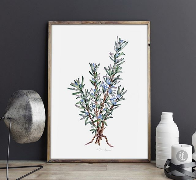The Rosemary planton my balcony is blooming again and it's so beautiful! 😍Reminded me I had this watercolor illustration made last year so I listed some prints of it on Etsy (check out the direct link in my BIO).
