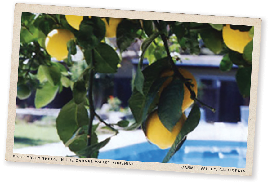 hiddenvalley-vintage-postcard-lemons.png