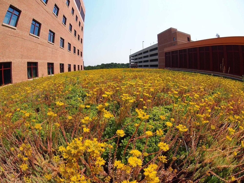 Green Roof 1.jpg