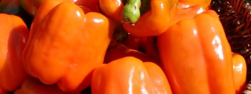 Poivron orange gourmet