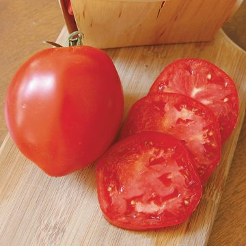 Tomate Amish (italienne)
