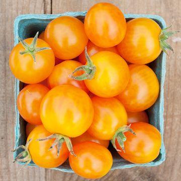 Tomate cerise dorée