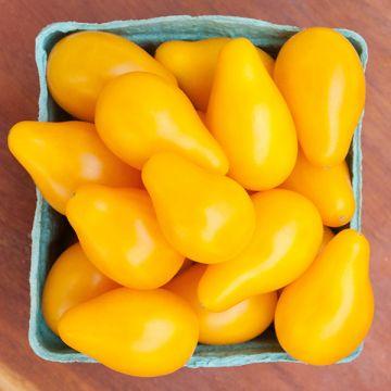 Tomate poire jaune
