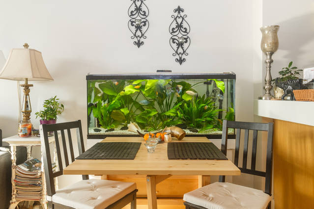Home staging | fish tank in dinning area
