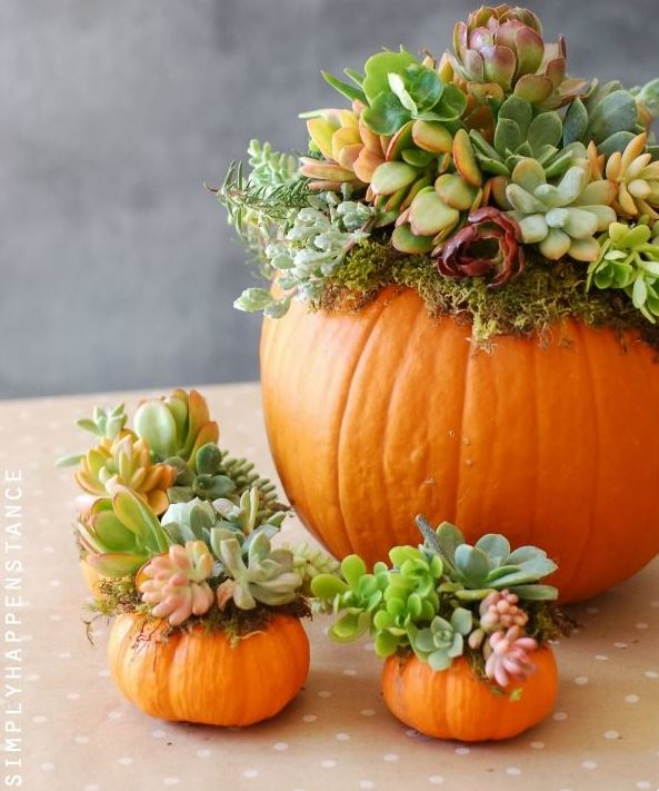 Use your pumpkins as succulent planters!  You can also use them as a vase for fresh cut flowers.
