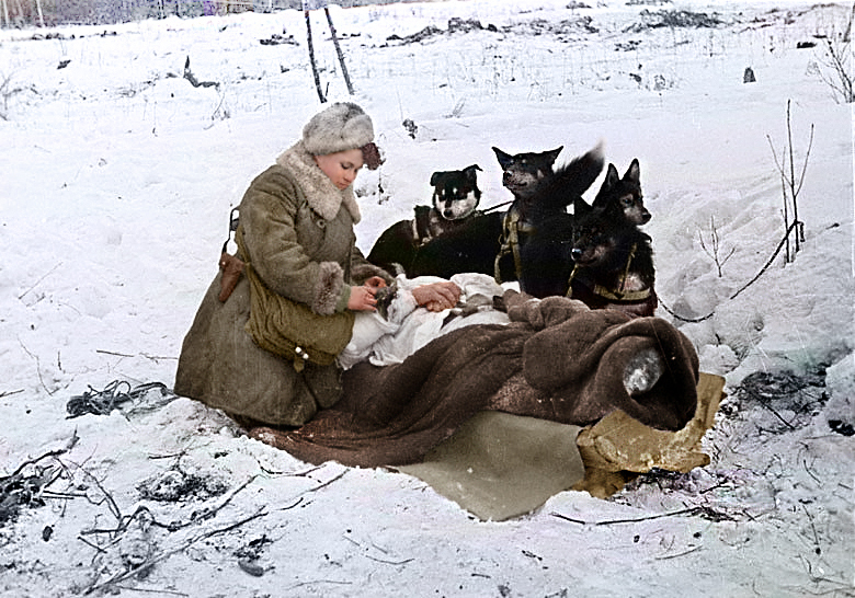 Russian nurse Kolesnikova E.F. evacuates a wounded soldier with a dog-drawn sledge, 1943