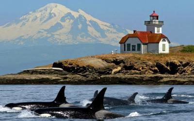 san_juan_cruises_deluxe-whale_watching_tour_mt-baker_orcas_patos_lighthouse.jpg
