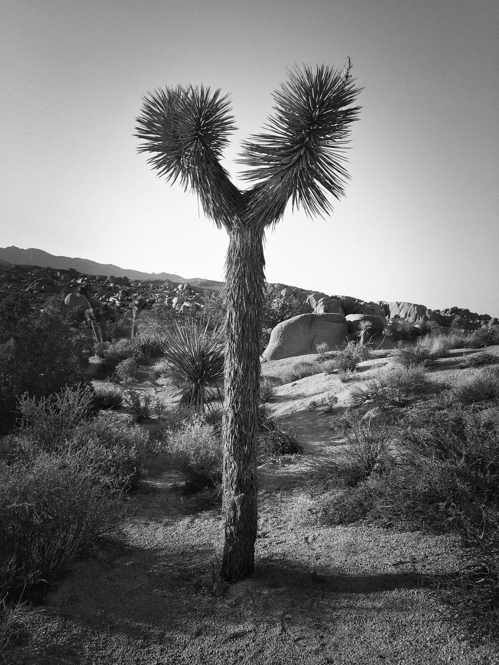 Joshua Tree-15.jpg