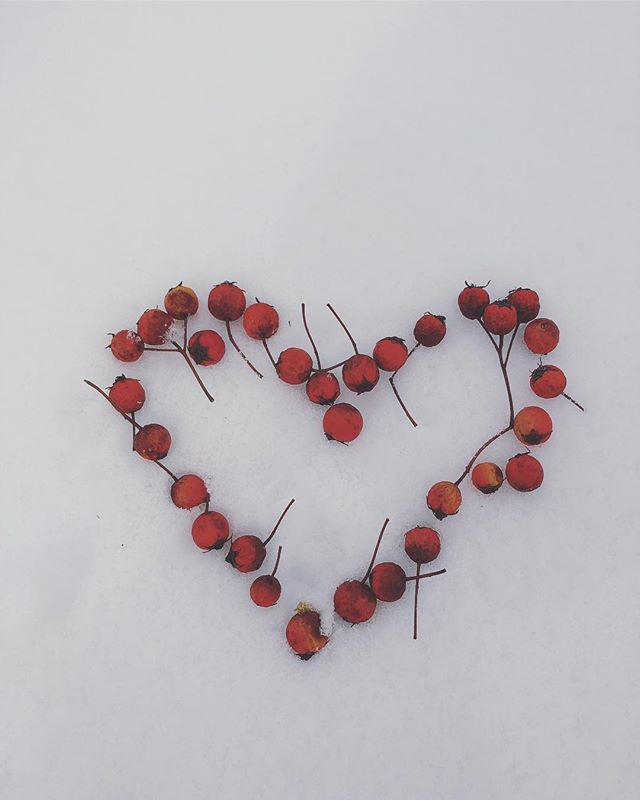 ☃️❣️❄️ Hawthorn is closed today due to the snow.  Community Acupuncture has been rescheduled for March 16th!! Instead, bundle up and go play outside for a bit on this beautiful winters day 💗 #hawthorn #crataegus #hearttonic #heartmedicine #acupuncture #naturalhealing #naturopathicmedicine #playinthesnow