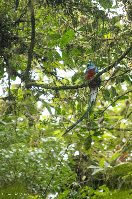 Costa Rica-0895.jpg