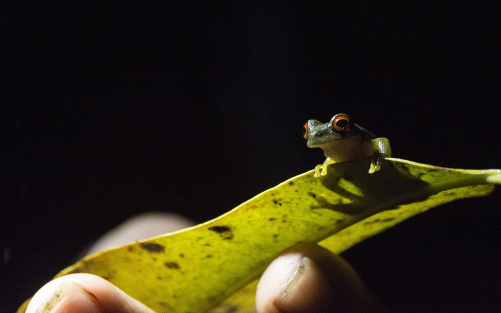 Costa Rica-0592.jpg