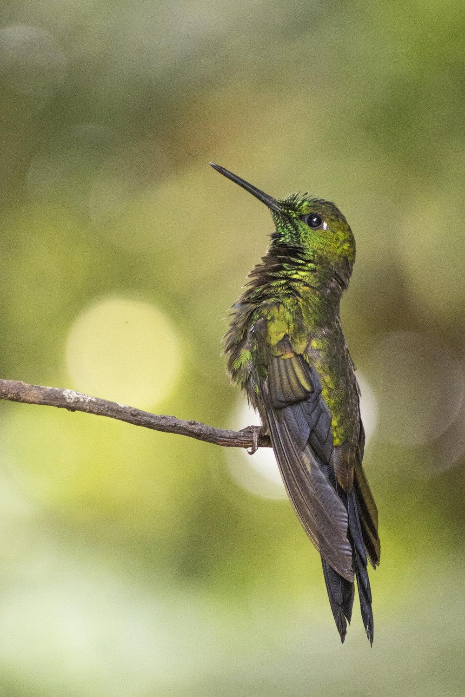 Costa Rica-0821.jpg