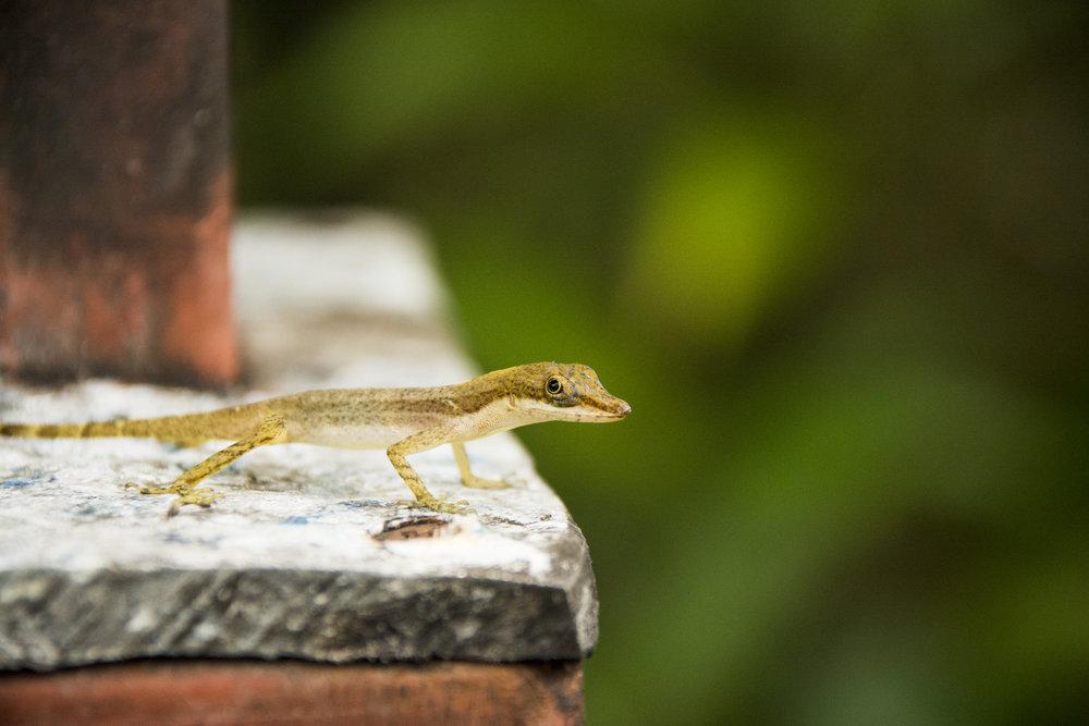 Costa Rica-0458.jpg