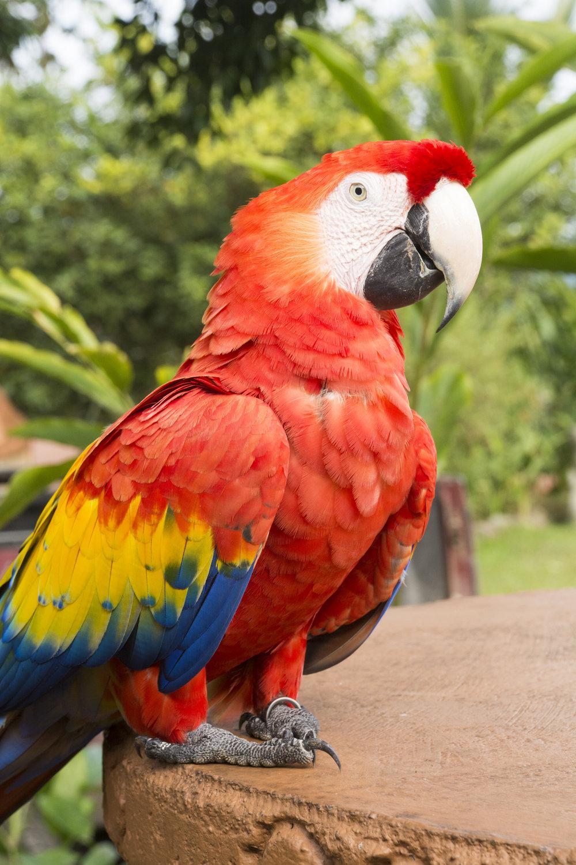 Costa Rica-0357.jpg