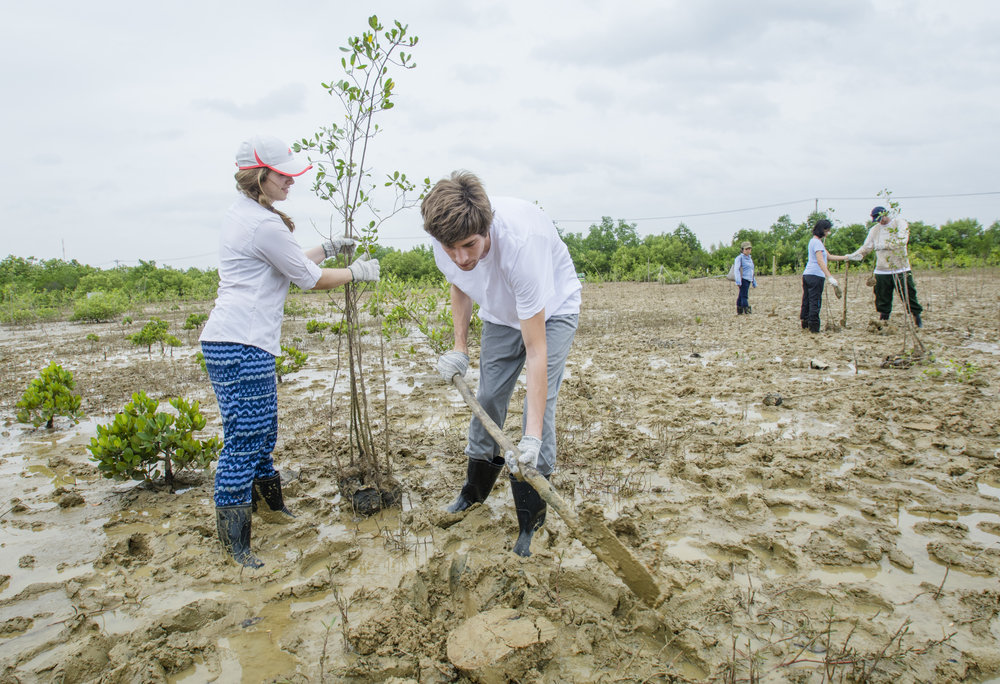 We helped the Can Gio Reserve mangrove restoration effort by planting around 40 young trees.