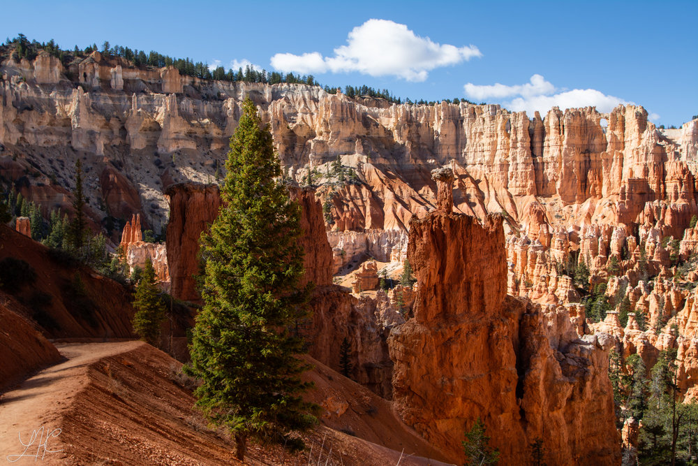 In the Amphitheater, Bryce Canyon National Park