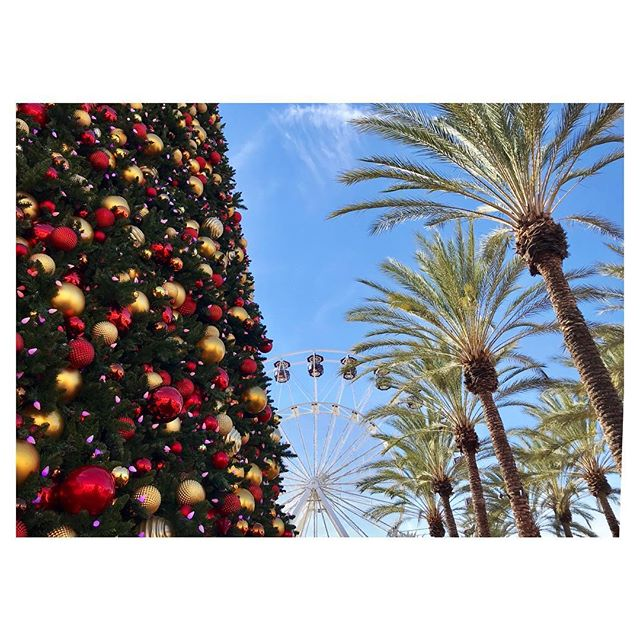 Holidays in Cali 🎄