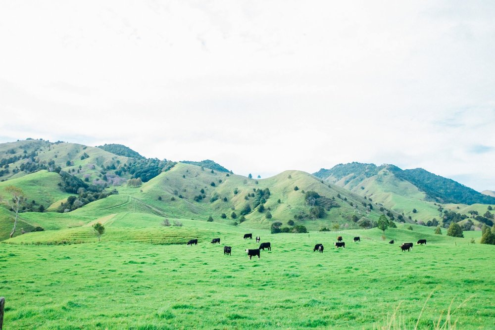 A typical New Zealand landscape. Photo: Marine Raynard