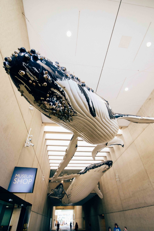 Australian Museum Brisbane