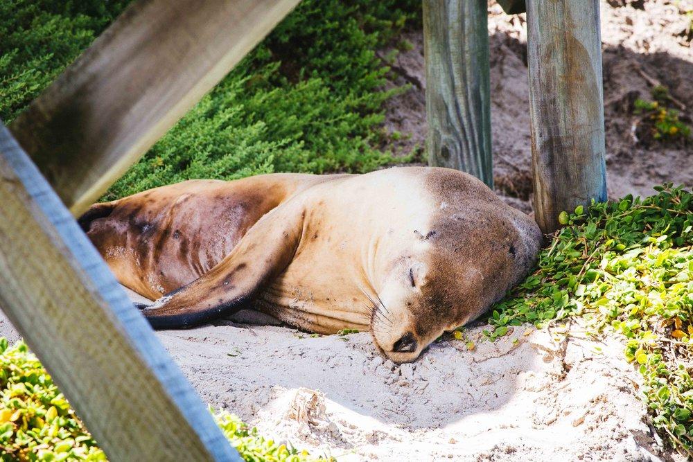 Kangaroo Island -